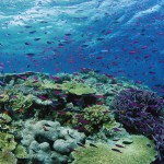 Revolution_coral-cover-on-the-great-barrier-reef_webcredit2